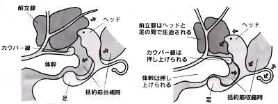 【前立腺】エネマグラ Part97【ドライオーガズム】 [無断転載禁止]©bbspink.comYouTube動画>3本 ->画像>7枚